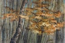 Les bambous et l'érable n°2 (1x1m) 2016