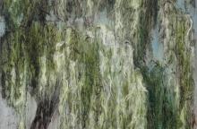 Saule pleureur n°9 (1,16x0,81m) 2014