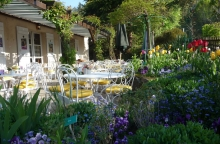 terrasse-fleurie