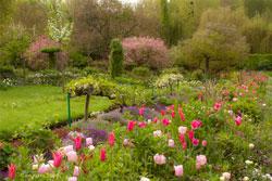 11Tulipes-Claude-Monet