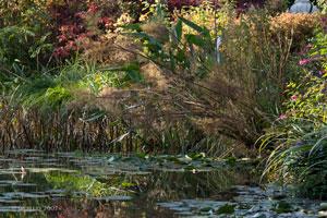 2Bassin-Claude-Monet-