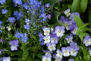 5Fleurs-Bleues-Claude-Monet