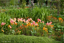 8Jardin-tulipes-Monet