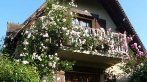 Balcon-et-rosiers
