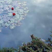 Giverny | Musée des impressionnismes | Les expositions