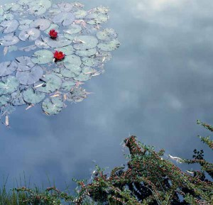 MDIG-2015-Giverny-Monet
